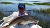 Don's 21 inch tailing red fish