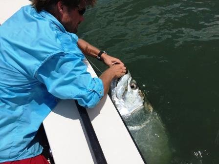 Tarpon, compressed.jpg