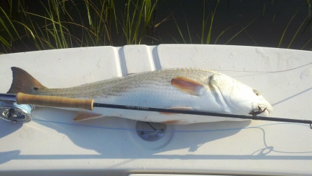 9-lb-29-inch-bass-in-the-grass