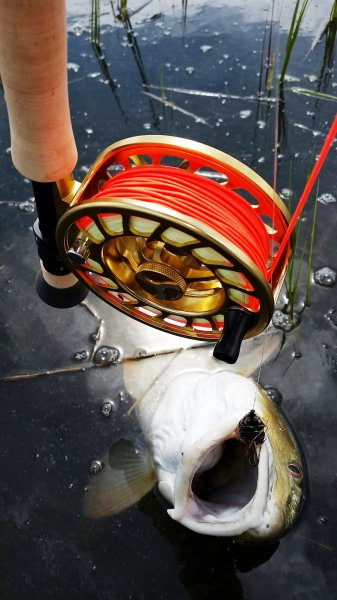 Red Fish and Reel