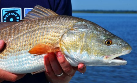 compressed-early-morning-red-fish