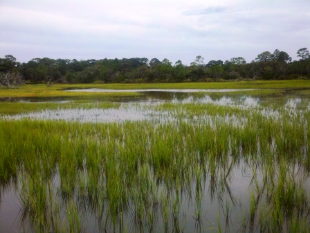 compressed-flooded-grass-flats_1